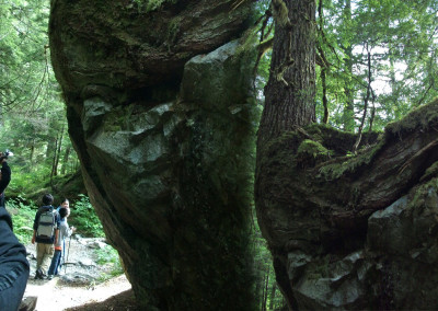 Big tree growing on big rock along the trail