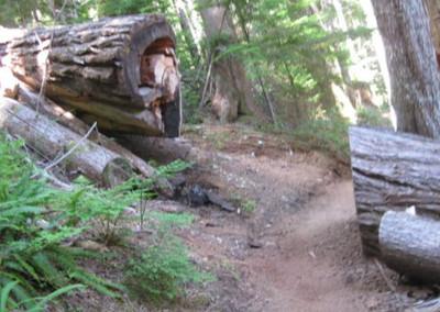...along Blanca Lake trail